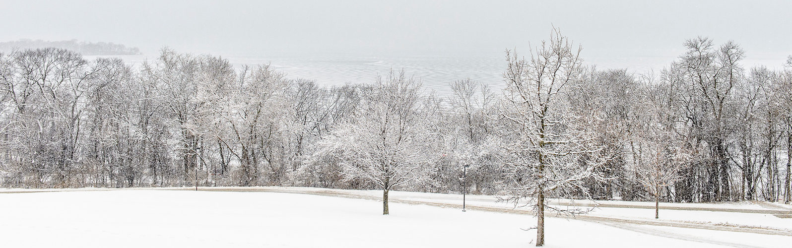 Frozen trees on the bank of Lake Mendota